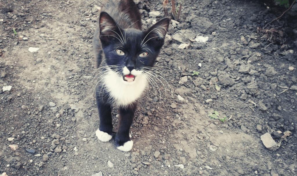 adottare un gatto