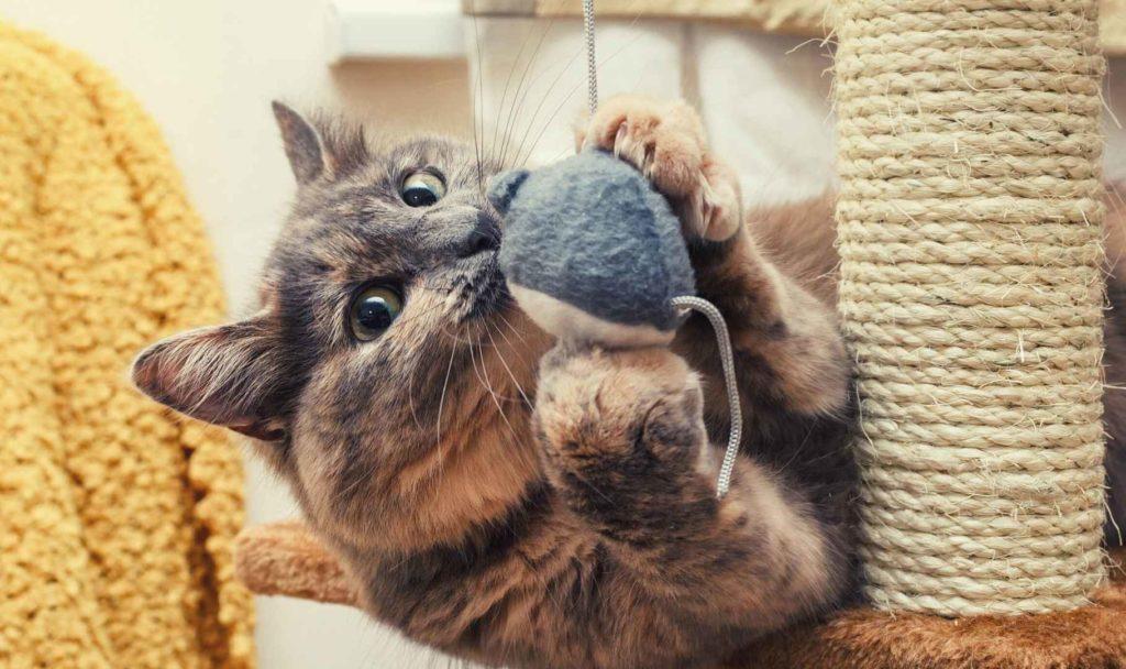 educare il gatto