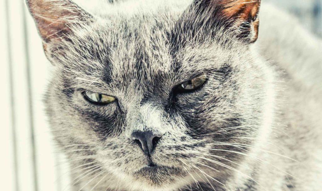 gatto solo in casa 15 giorni arrabbiato