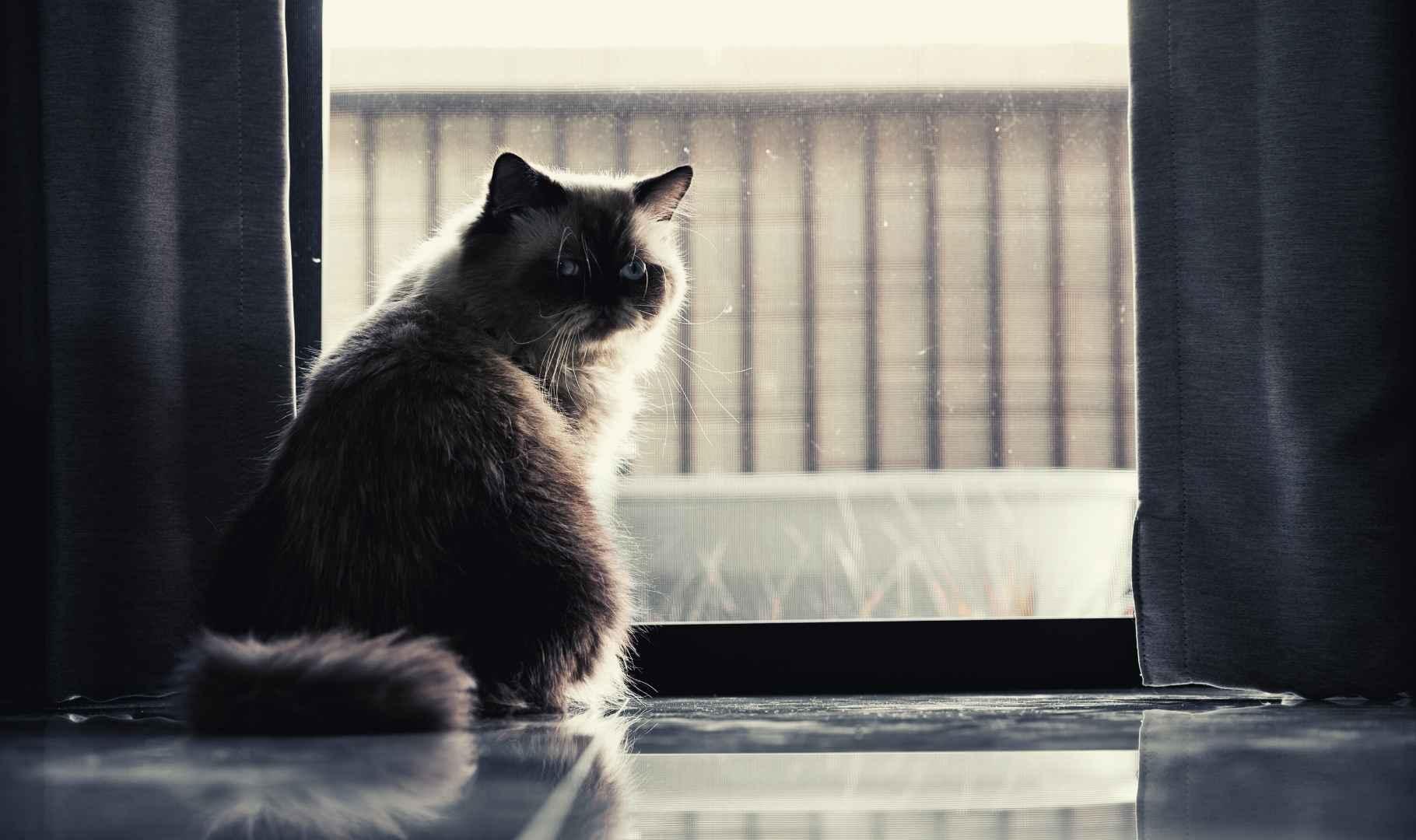 lasciare un gatto in casa da solo