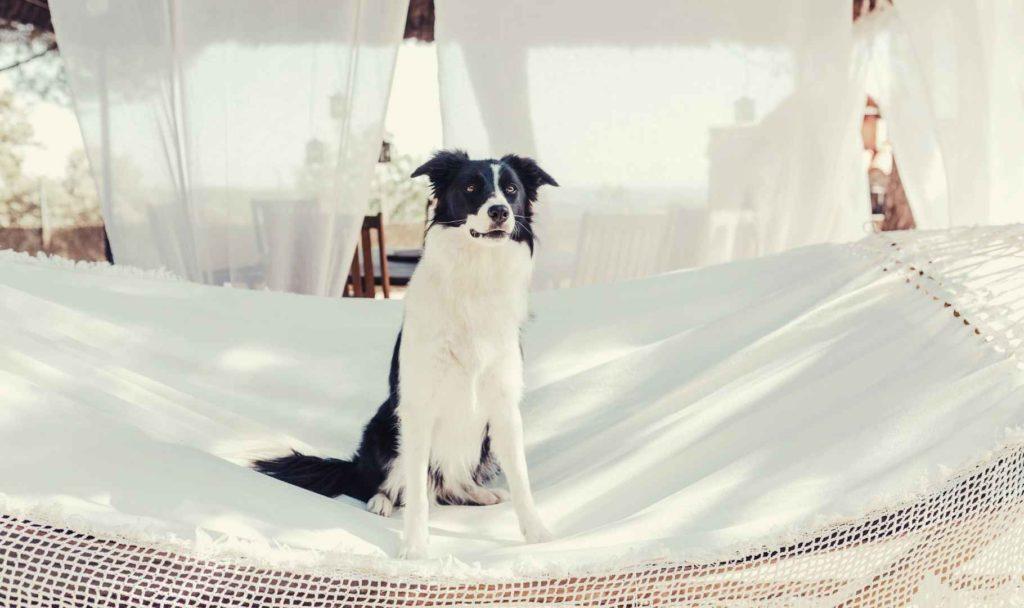 quanto costa una pensione per cani