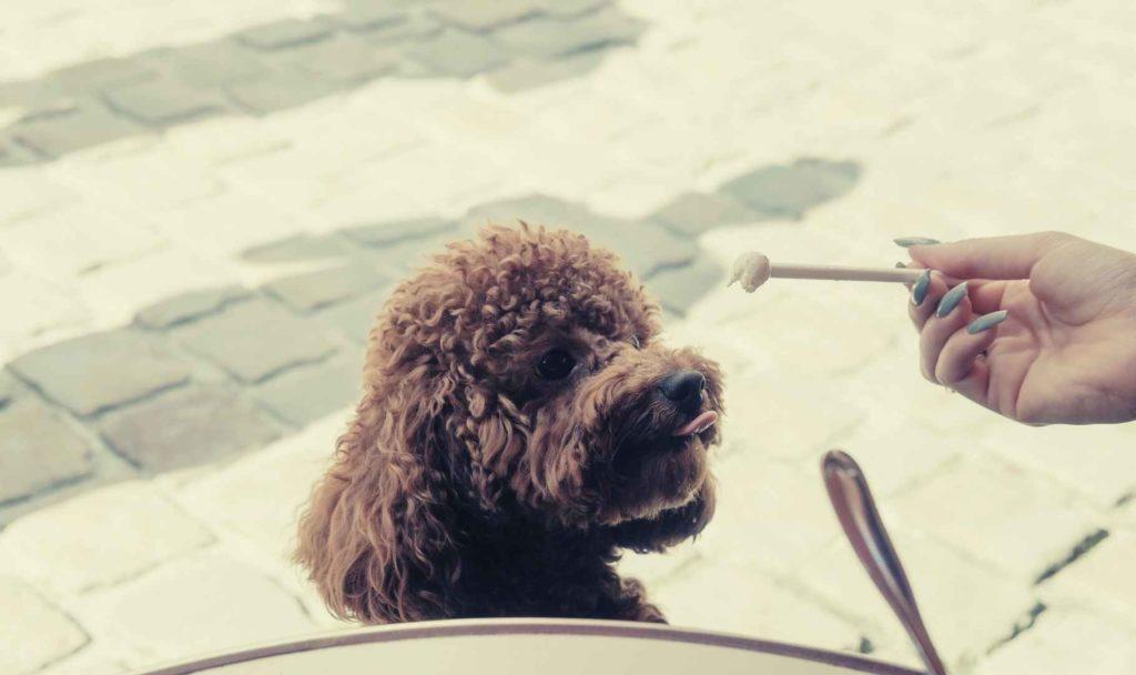 cane che mangia gelato